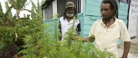 Ofrecen tours de marihuana en Jamaica | thc barcelona | Scoop.it