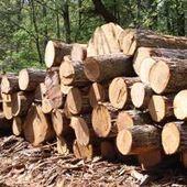 Quid du traitement des grumes à l'export ? - bati journal   Interprofession Forêt Bois des Pyrénées-Atlantiques   Scoop.it