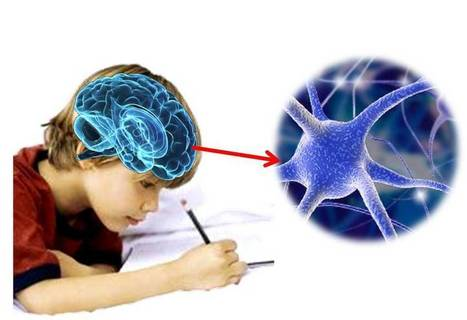Sistema neuroescritural: El cerebro y la escritura | REDEM | Aprendiendo a Distancia | Scoop.it