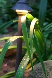 December garden inspiration   Gardening With Confidence with Helen Yoest   Grown Green Gardens   Scoop.it
