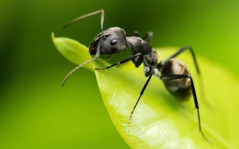 Ant Infestation: How to get rid of ants in the home | Pest Control | Scoop.it