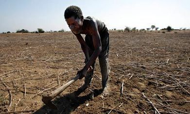 New food security alliance is timely for Malawi's path out of poverty - The Guardian | Kenya Food and Water Security | Scoop.it