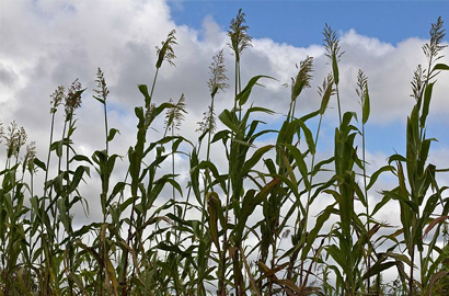 Govt to use ICT in Agriculture | ICT Showcases 2013 | Scoop.it