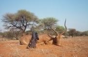 Poľovanie v Južnej Afrike: Ako sa správne pripraviť - Recenzia.info | Favorite blog posts | Scoop.it