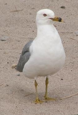 Pollution plastique : les estomacs des oiseaux de mer du nord-ouest Pacifique plus remplis qu'il y a 30 ans | Ca m'interpelle... | Scoop.it