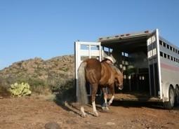 It's 100 Degrees: Part 1 – America's Horse Daily | Horse Sense | Scoop.it