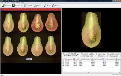 Tomato Analyzer: A Useful Software Application to... | Protocol | Barley genetics and seed physiology | Scoop.it