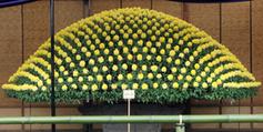 Versailles va exposer des chrysanthèmes japonais - Francetv info | Japon | Scoop.it