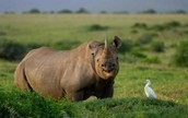8 arrested for suspected rhino poaching | Getaway Travel Blog | Save our Rhino and all animals...this is what it looks like!!!!! | Scoop.it