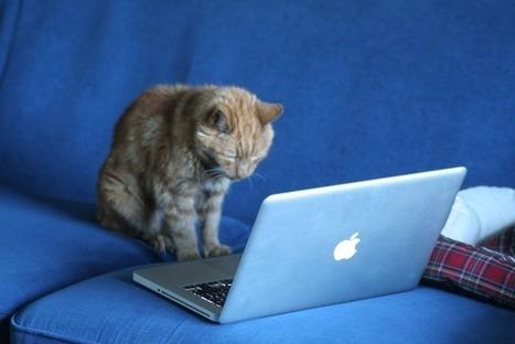 Las mascotas se encuentran con la tecnología: los gadgets como ... | tecnofobia | Scoop.it