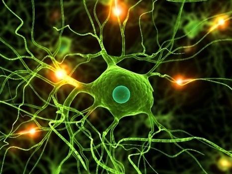 6 hábitos que matan tus neuronas | Neurociencias | Scoop.it