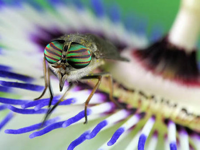 Fantastic Macro Insect Photography by Jim Hoffman | The Creative Commons | Scoop.it
