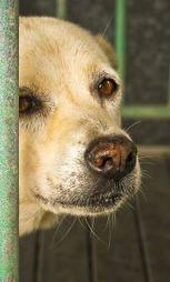 Emotional Pain in Animals: An Invisible World of Hurt   Psychology Today   The best of the best: Jesus Christ   Scoop.it
