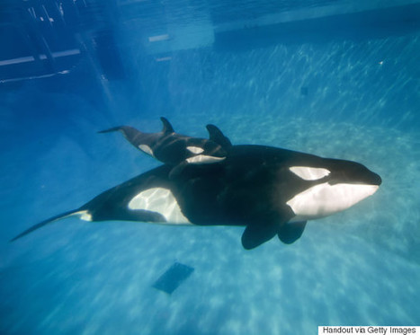 Animal Rights Activists Are Celebrating A Massive Victory Over SeaWorld | Animals R Us | Scoop.it