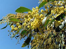 How to Make a Native Australian Garden   Australian Plants on the Web   Scoop.it