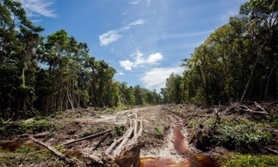 Will new EU food labelling rules change your purchasing decisions on palm oil? | Vietnam: Inclusive & Sustainable Agriculture | Scoop.it