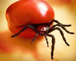 Suspend confined testing of GM foods - GhanaWeb | GMO GM Articles Research Links | Scoop.it