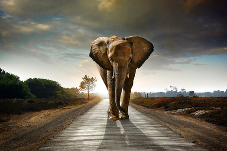 The state of Hadoop: Strong and poised to explode | Digital-News on Scoop.it today | Scoop.it