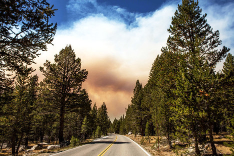 Fighting Forest Fires Before They Get Big—With Drones | Timberland Investment | Scoop.it