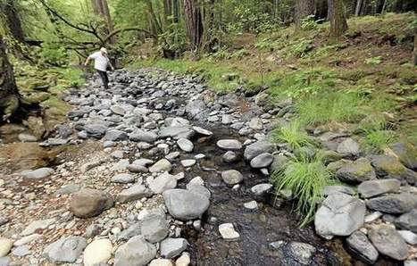 California tries to save salmon in Wine Country creeks - Daily Democrat | Fish Habitat | Scoop.it
