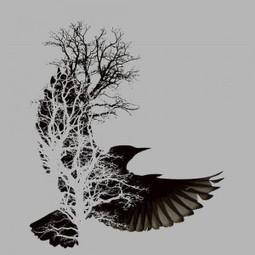 Five Birds' Worth   Clodagh O'Brien   Scoop.it