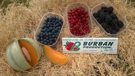 Sous le soleil de La Baule, Stéphane et Xavier Burban perpétuent la production familiale de fraises, framboises et melons…   Actualité du monde de la gastronomie   Scoop.it