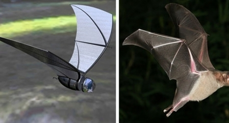 Really! Can Robots fly? | News Nation | Heron | Scoop.it