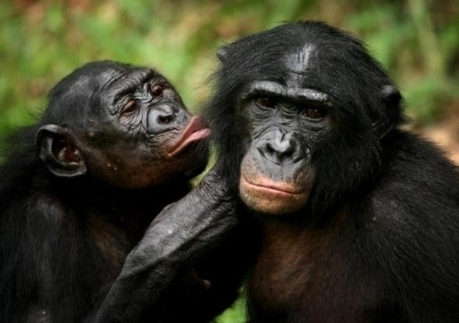 Book Talk: Of apes and atheists – is empathy evolution? | Empathy and Animals | Scoop.it