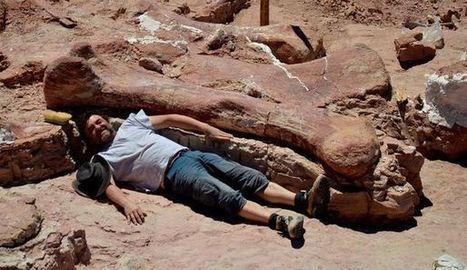 Le plus grand dinosaure du monde découvert en Patagonie | Aux origines | Scoop.it