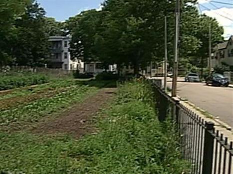 Urban farming taking root in Boston | Économie circulaire locale et résiliente pour nourrir la ville | Scoop.it