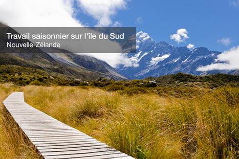 Le travail saisonnier (picking/packing) sur l'Île du Sud - PVTistes.net | NZ | Scoop.it