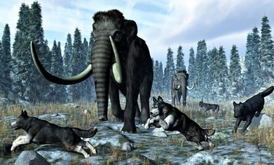 How hunting with wolves helped humans outsmart the Neanderthals | Aux origines | Scoop.it