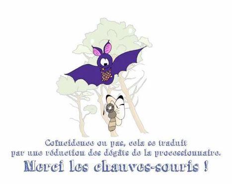 Les chauves-souris, cauchemar nocturne de la processionnaire du Pin | EntomoNews | Scoop.it