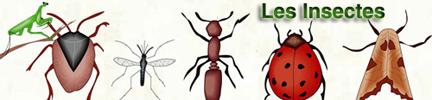 Dossiers d'archives Science de RFI : Les Insectes | EntomoScience | Scoop.it