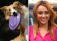 'Dog With A Blog': Disney Channel Orders New Show   Animal Cruelty   Scoop.it
