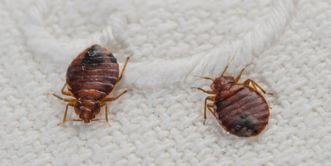 New Study Shows How Long You Have To Freeze Your Stuff To Kill Bed Bugs | Pest Management | Scoop.it