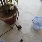 Crea un sistema de regado de plantas con Arduino | tecno4 | Scoop.it