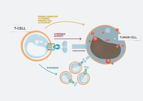 Celyad - Immuno Oncology | Cancer Immunotherapy Review | Scoop.it