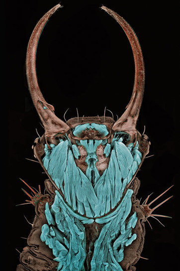 40 Years of the World's Best Microscope Photos   WIRED   photography and art   Scoop.it