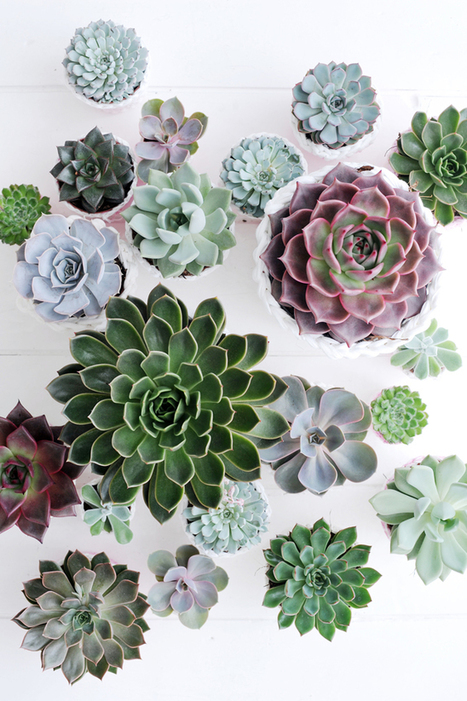 Happy Interior Blog: Plant Of The Month: Echeveria | Home Essentials | Scoop.it