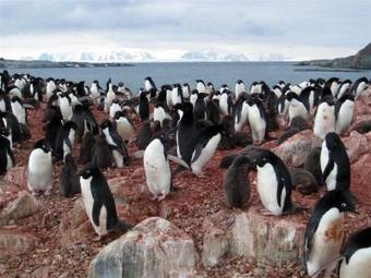 Study reveals strong links between Antarctic climate, food web | Sustain Our Earth | Scoop.it