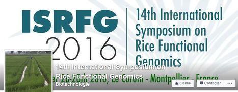 14th International Symposium on Rice Functional Genomics | Rice Blast | Scoop.it