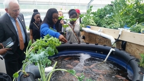 USA - Sodexo Teams with Atlanta Public Schools in Support of Innovative Garden Program | Aquaponics in Action | Scoop.it