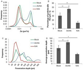 A Beneficiary Role for Neuraminidase in Influenza Virus Penetration through the Respiratory Mucus | Influenza | Scoop.it