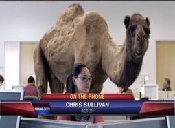 """""""Guess What Day It Is? It's Hump Day..."""" An Interview with Voice Actor, Chris Sullivan, the Geico Camel 