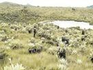 Se extingue planta de páramos boyacenses que soporta ecosistemas de otras regiones   Educación ambiental para la protección de páramos   Scoop.it