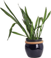 Bring Your Houseplants Indoors | The Miracle of Fall | Scoop.it