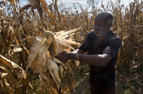 UN calls on countries to help break cycle of hunger in dryland | FAO | Food & Nutrition Security in East Africa | Scoop.it