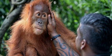 L'écotourisme peut-il sauver les espèces menacées? | Ecotourisme | Scoop.it