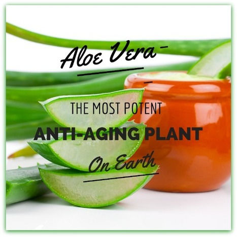 Aloe Vera for Wrinkles – Why It's the Ultimate Anti-Aging Plant (+6 Homemade Recipes) - Natural Alternative Therapies | Alternative Medicine | Scoop.it
